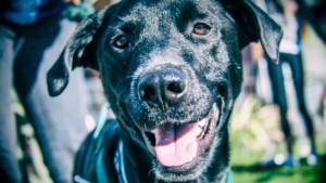 Buster Portrait