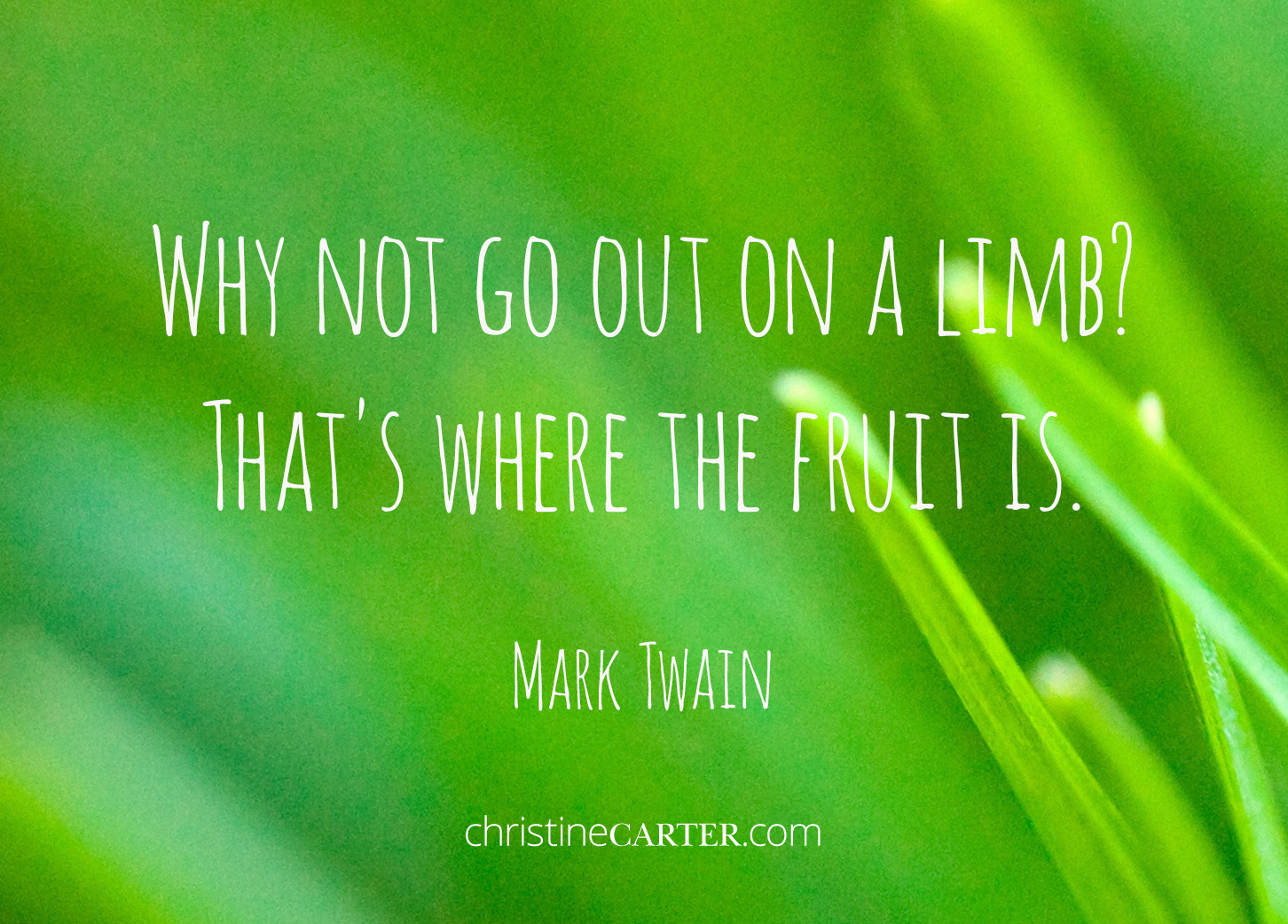 Why not go out on a limb? That's where the fruit is. – Mark Twain